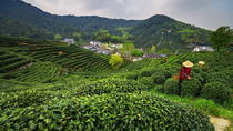 Small Group Tea Picking Day Trip at Hangzhou Dragon Well Tea Village with Lunch, Hangzhou, ...