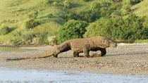 2-Days Visit Komodo Dragon: A Wild Life Adventure from Bali Over Night at Hotel, East Nusa ...