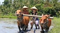 Balinese Daily Life Tour: Live Like A Farmer, Bali, Bike & Mountain Bike Tours