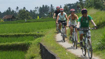 Ricefield Electric Biking, Bali, City Tours