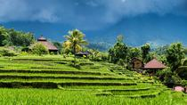 Ubud Rice Field Trekking Tour, Ubud