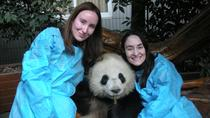 One-Day Private Panda Tour of Chengdu, Chengdu, Private Sightseeing Tours