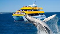 Spirit of Hervey Bay Whale Watching Cruise, Hervey Bay, Dolphin & Whale Watching