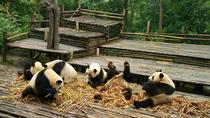 From Chengdu: Panda Base and Giant Buddha in One Day, Chengdu, Cultural Tours
