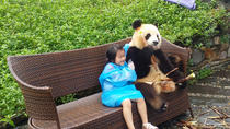 Dujiangyan Panda Base with Optional Volunteering and Photo-taking with Panda, Chengdu