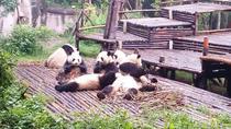 Private Chengdu Giant Panda Base and Leshan Giant Buddha Trip by High-Speed Train, Chengdu, Private...