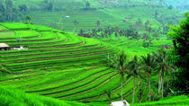Ancient Temples and Jatiluwih Rice Terrace Private Tour, Bali, Hiking & Camping