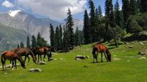 Full-Day Private Trip to Thajiwas Glacier and Zero Point from Srinagar, Srinagar, Private Tours