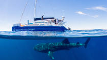Ningaloo Whale Shark Swim on a Luxury Sailing Catamaran, Exmouth, Catamaran Cruises