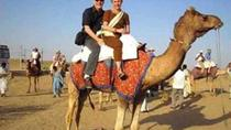 Camel Safari Day Tour in Jodhpur, Jodhpur, Day Trips