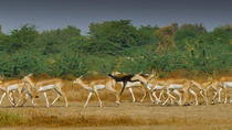 Private Tour: Village Safari Half-Day Tour In Jodhpur, Jodhpur, Private Sightseeing Tours
