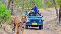 Private Transfer From Udaipur To Ranthambore, Udaipur, Private Transfers