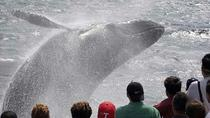 Whale Watching Tour in Gloucester, Gloucester, Dolphin & Whale Watching