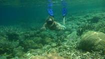 Gili Island Snorkeling Day Trip, Lombok, Day Trips