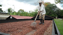 Cacao Plantation and Chocolate Factory Tour, Santo Domingo, Chocolate Tours