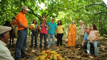 Cacao Plantation and Chocolate Factory Tour with Tasting of Chocolate, Santo Domingo