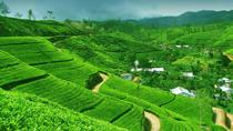 2 -Days private tour to Nuwara Eliya from Colombo, Colombo, Private Sightseeing Tours