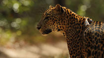 All Inclusive Private day tour to Wipattu National Park From Negombo, Negombo, Private Day Trips