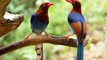 Bird Watching and Cycling expedition in Kitulgala, Central Sri Lanka, 4WD, ATV & Off-Road Tours