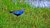Muthurajawela Wetland Day Tour, Negombo, Nature & Wildlife