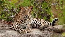 Overnight Private Leopard Safari with Luxury Tented Camping, Colombo, null