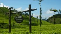 Private Day Tour to Lipton Seat and Dambetenna Tea Factory from Ella, Colombo, 4WD, ATV & Off-Road ...