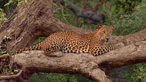 Private Full day Leopard Safari with Picnic Lunch at Yala National Park, Yala National Park, ...