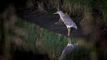 Private Night Bird watching tour in Negombo Lagoon, Negombo, 4WD, ATV & Off-Road Tours