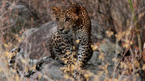 Yala National Park Safari Experience from Galle including Lunch at a Campsite, Galle, Private Day ...