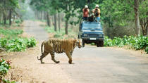 Chitwan Jungle Safari Tour, Nepal, Multi-day Tours