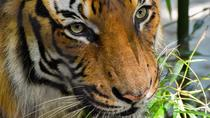 Wild Life Sanctuary and Safari at Srisailam : India's Largest and Youngest !!!, Hyderabad, Cultural...