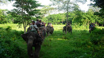 3-Day Chitwan Wildlife Safari Tour from Kathmandu, Kathmandu, Multi-day Tours