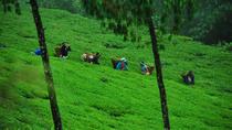 3-Day Eastern Paradise Ilam Tour from Kathmandu, Kathmandu, Multi-day Tours
