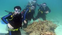 Cham Island Full Day Trip with Scuba Diving, Hoi An, Scuba Diving