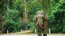 Day Trip to Khao Yai National Park including Elephant Ride, Bangkok, Nature & Wildlife