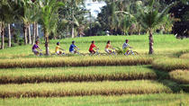 Full-Day Batur Village Cycling Tour, Ubud, Bike & Mountain Bike Tours