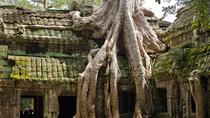Half Day Angkor Wat and Ta Prohm, Siem Reap, Day Trips