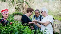 Half Day Araksa Tea Garden, Chiang Mai, Day Trips