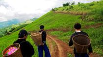 Half Day Doi Tung Royal Projects and Hill Tribes, Chiang Rai, Day Trips