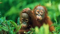 Private Tour: Gunung Leuser National Park Trekking Tour with Orangutan Viewing from Medan, Medan, ...