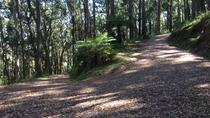 Half-Day Mount Dandenong Trail Running Tour Including Breakfast, Melbourne, Running Tours