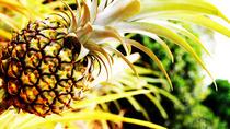 Pineapple Farm Day Trip, Granada, Day Trips
