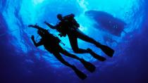 PADI Open Water Diver Certification in Cabo San Lucas, Los Cabos, Scuba Diving