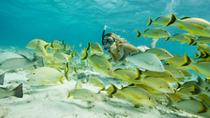 Santa Maria and Chileno Bay Snorkel Adventure, Los Cabos, Kayaking & Canoeing