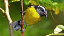 St Maarten Bird-Watching Tour, Philipsburg