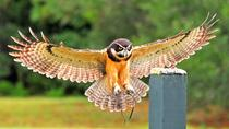 Birds of Prey Guided Tour and Flight Demonstration at the Avian Conservation Center, Charleston, ...