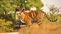 2-Days Private Ranthambhore Tiger Tour from Jaipur, Jaipur, Multi-day Tours