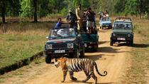 Private 3-Day Ranthambhore Tiger Tour from Agra including Agra and Jaipur, Agra, Multi-day Tours