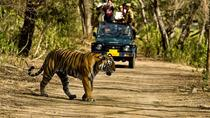 Private 5-Day Ranthambhore Tiger Tour from Delhi including the Taj Mahal, Agra and Jaipur, Neu-Delhi