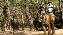 Private 6-Day Ranthambhore Tiger Tour from Goa including Delhi, Agra and Jaipur, Goa, Multi-day ...